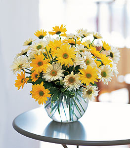 Dashing Daisies (container will vary)