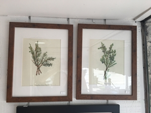 Wooden Framed Plant Print Pair